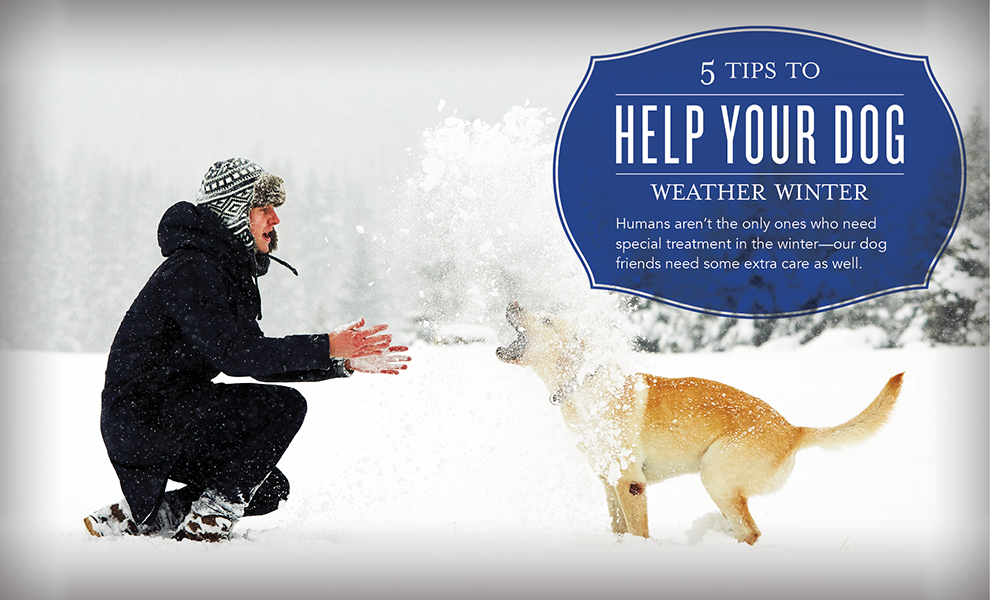 Blog-Help-Your-Dog-Weather-Winter_Header_US_0116_sk_v1.png