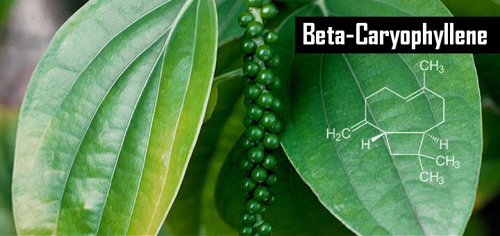 bcp-dietary-cannabinoid-0-11-12-720x340