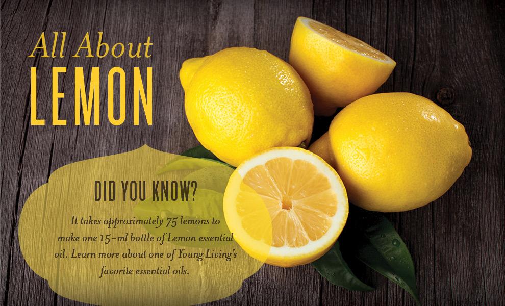 blog-images6m4x-Lemon-2.jpg