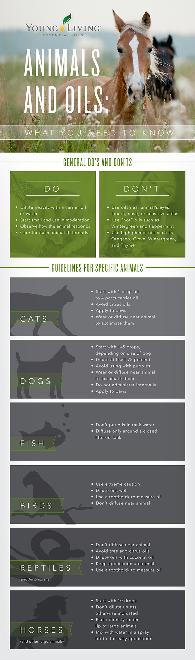 Animals-and-Pet-Infographic-3.jpg