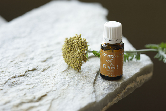 pic of fennel